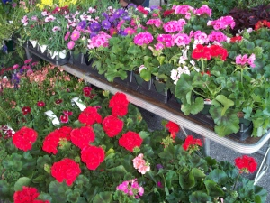 Flowers at the Farmers\' Market